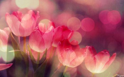 photo-romantique-1536338