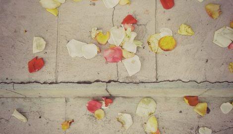 roses encart